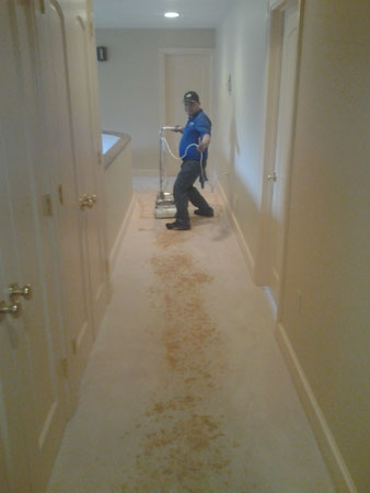 Residential Carpet Cleaning Services Montgomery Co Md